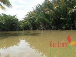 Mekong Delta in November