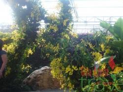Nong Nooch Garden